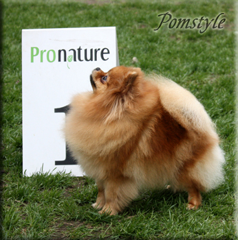 Pomstyle